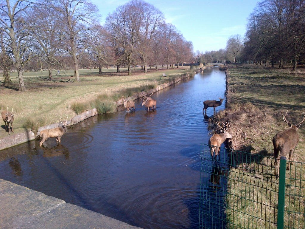 Springtime in Bushy Park